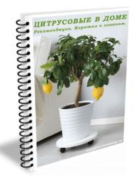 Рекомендации по уходу за цитрусовыми растениями