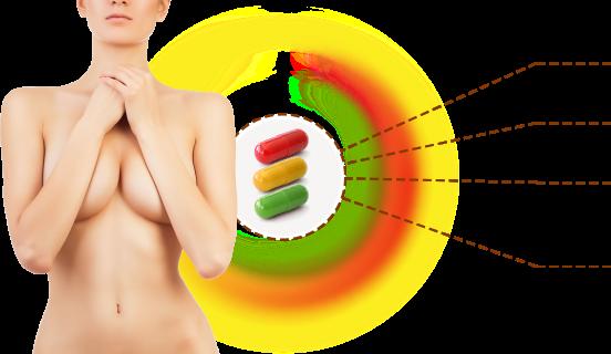 Метоболизм Эстрогенов. Гармоно-зависимые опухоли