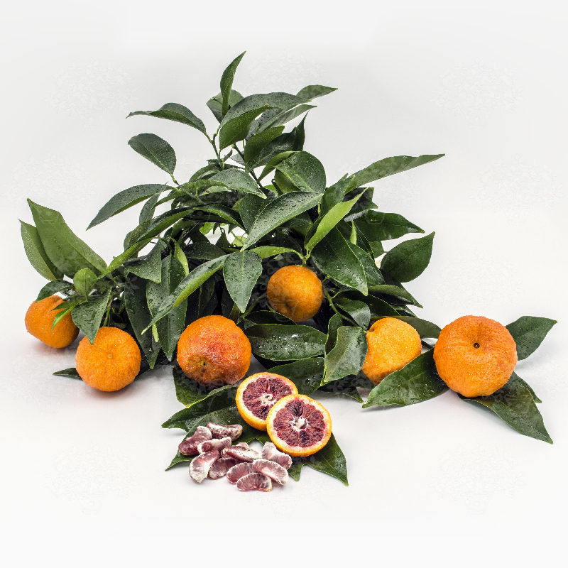 Клементин (Тангор) АМОА 8 (Citrus Clementina Amoa 8)