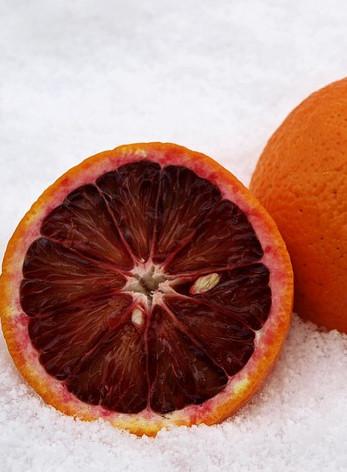 Citrus sinensis cv. Moro