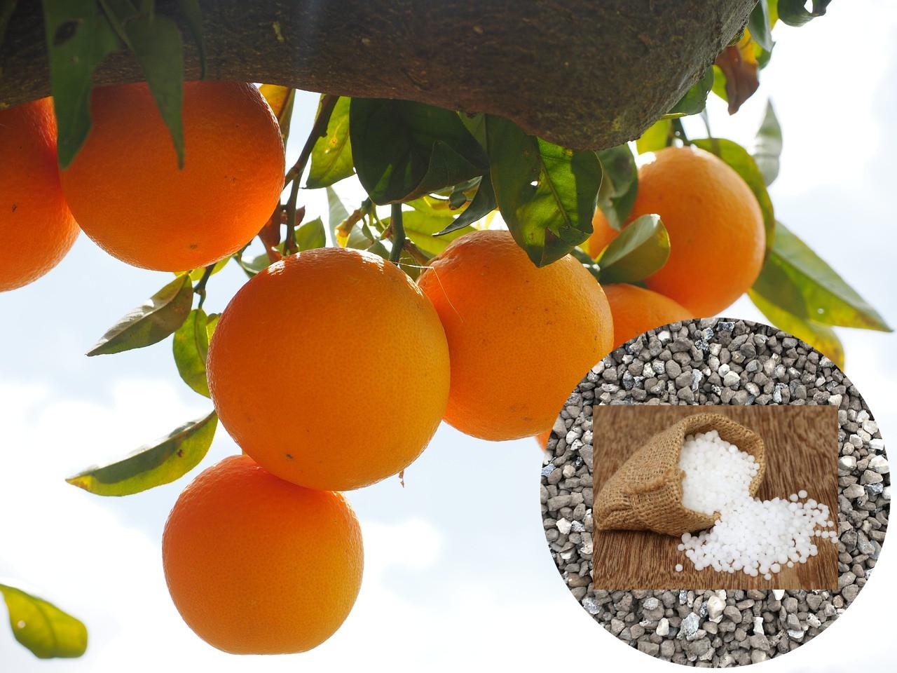 Удобрения для цитрусовых. Когда, чем и как?
